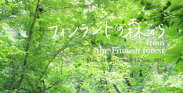 finforest600x306